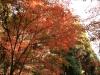 2011年秋の風景1
