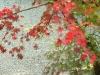 2011年秋の風景4