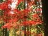2011年秋の風景11