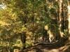 2011年悠久の森ウォーキング3