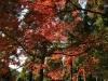 2011年悠久の森ウォーキング11