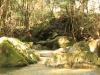 2011年悠久の森ウォーキング12